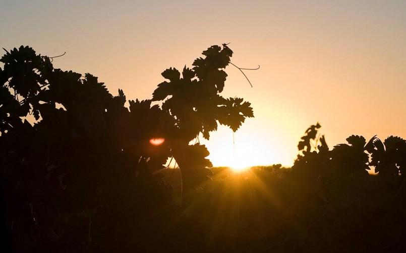 La Ruta del Vino Ribera del Guadiana abre sus puertas a nuevos socios