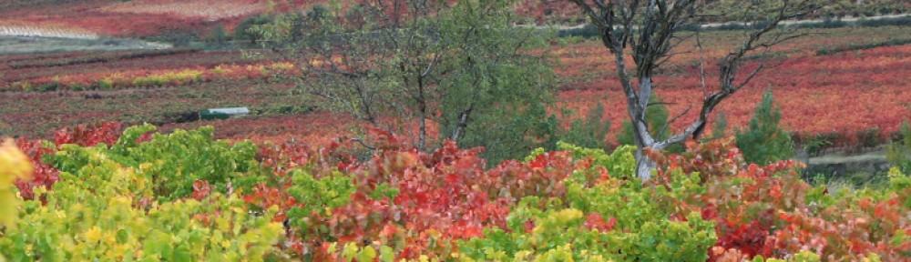 Ruta Vino Rioja Baja