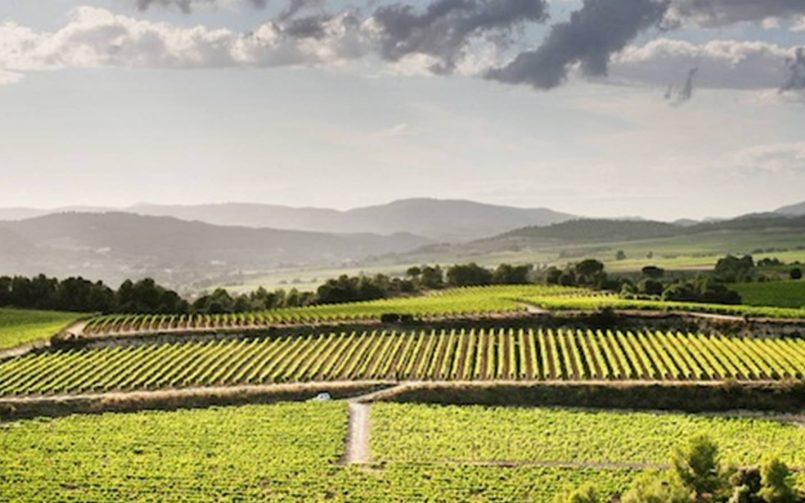 El enoturismo sigue arrojando buenos datos para el turismo español