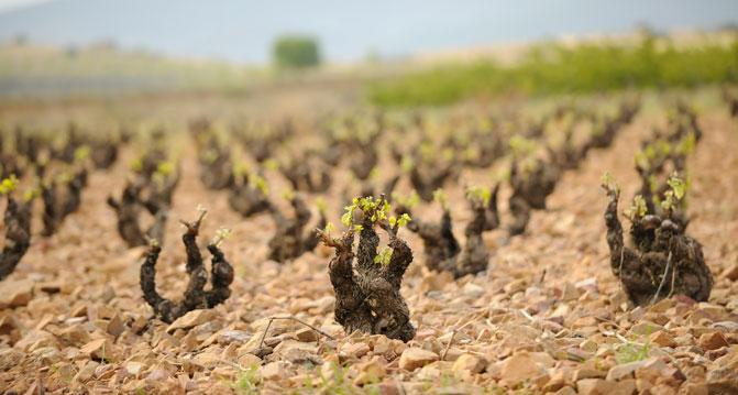 Si vas a Calatayud…. pregunta por su Ruta del Vino