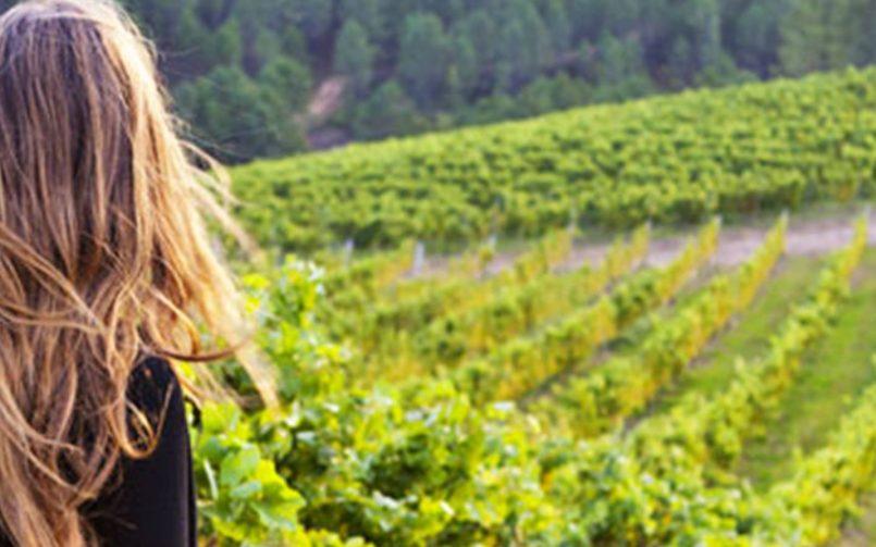 Suben las pernoctaciones y el gasto en las Rutas del Vino de España
